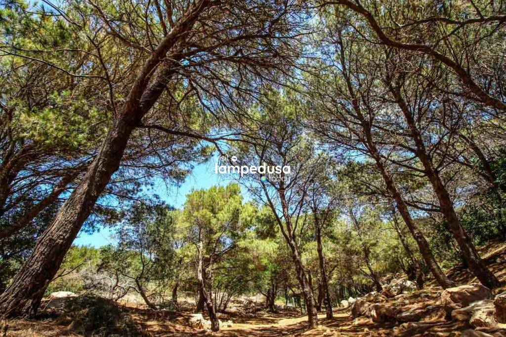 Forestale a Lampedusa