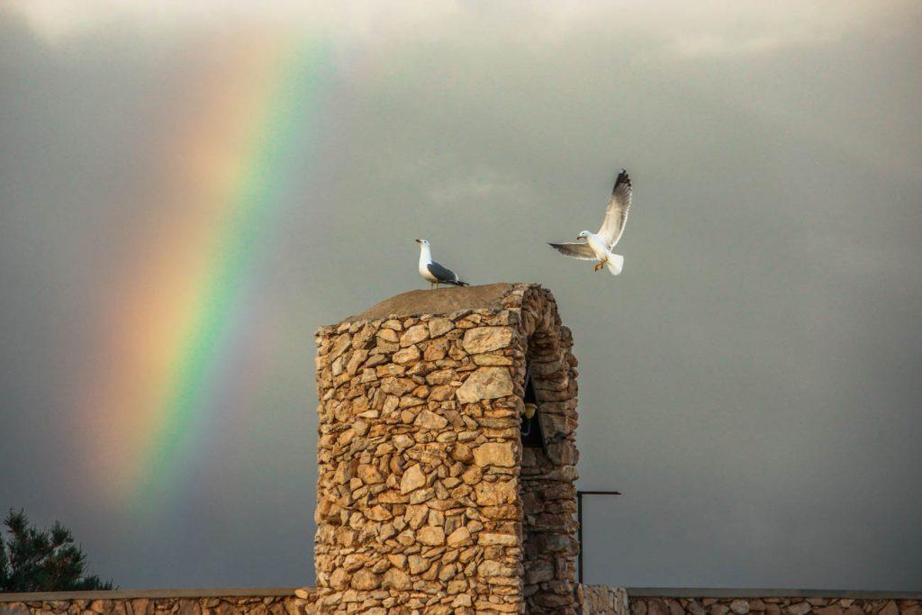 Albero Sole a Lampedusa