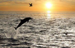 Avvistamento delfini a Lampedusa