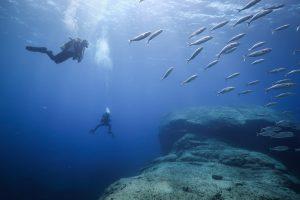Immersioni subacquee a Lampedusa, Linosa e Lampione
