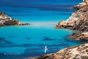 Elena Capelli: «Blu di Lampedusa»