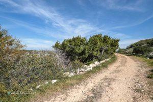 Lampedusa, asparagi e finocchietto